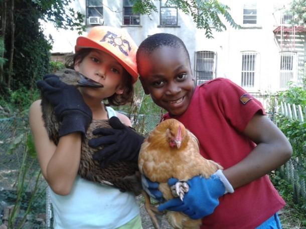 Chickens-773x580
